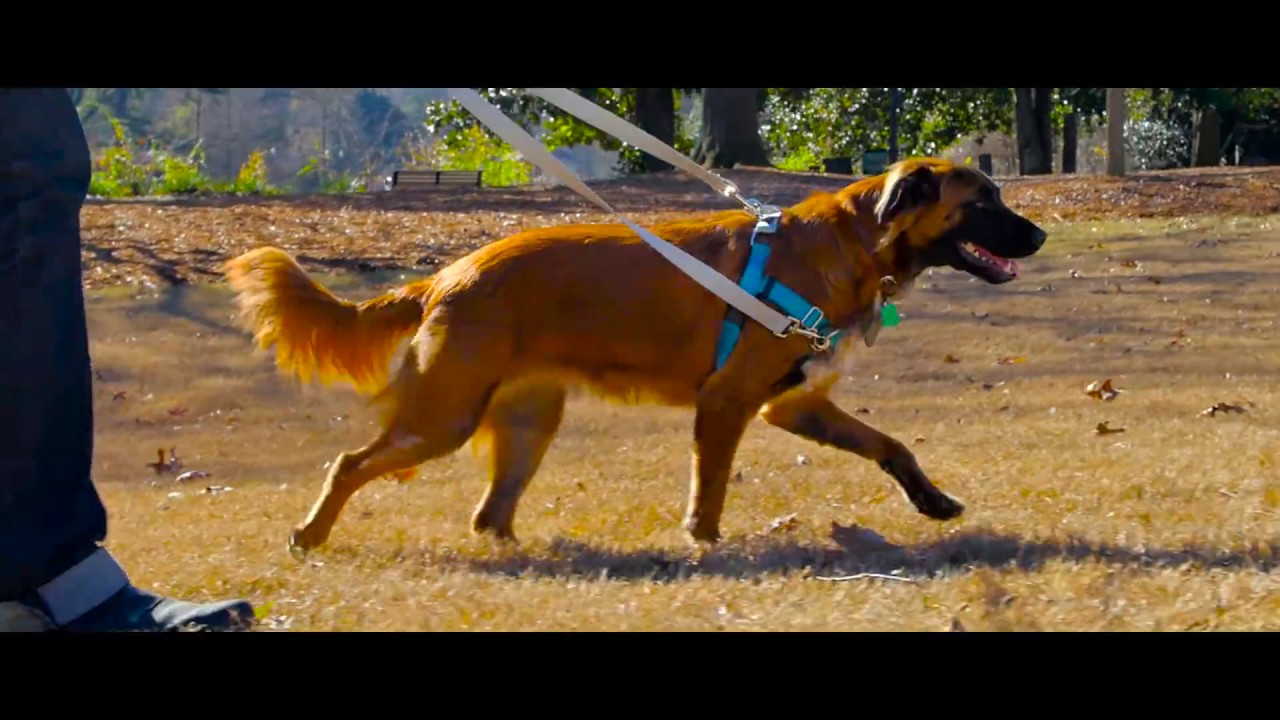 Freedom No Pull Harness 2 Hounds Design Youtube