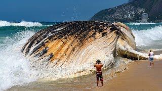 世界で最も巨大な海の生き物7選