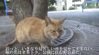 例によってタイトルの元ネタはよく知りませんすいません。 ブログ http://blog.livedoor.jp/nekokamasu/