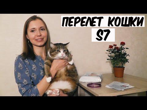 Вопрос: Как ведут себя ваши кошки и коты при посещении ветклиники?