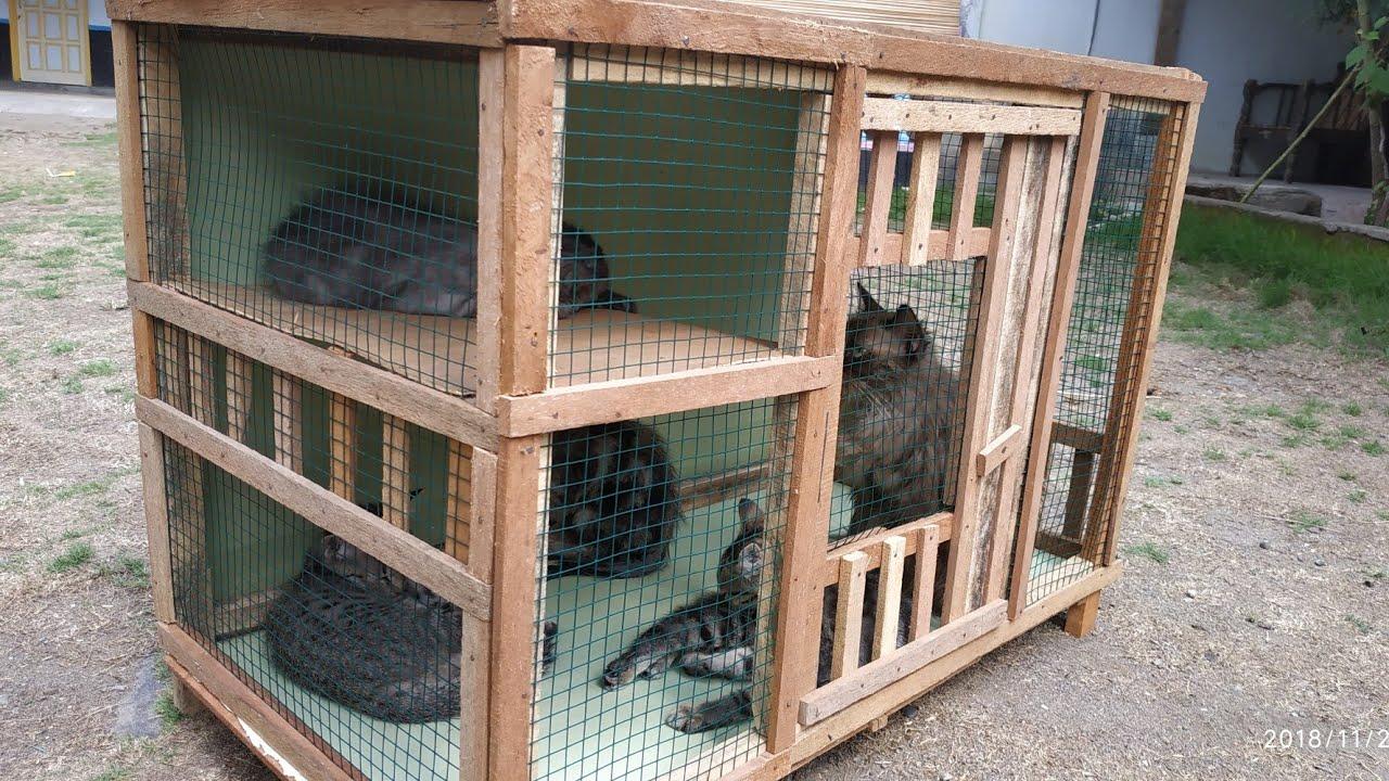 Cara Membuat Kandang Kucing Dari Aluminium - Pagar Rumah