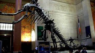 American Museum of Natural History Entrance