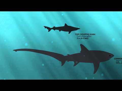 Sharks of British Columbia