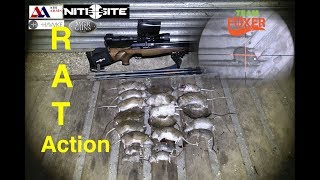 Grain Store Ratting With An Air Rifle