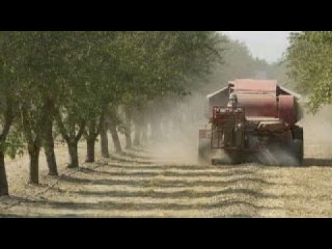 Trump's tariffs benefiting almond growers in Australia