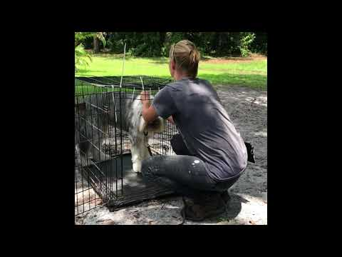 Ricky and Lucy (bearded collies) jumpstart program
