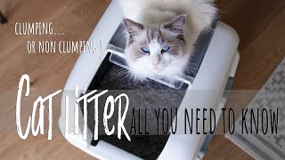 Which cat litter is best? Cleaning litter box  | Ragdolls Pixie and Bluebell
