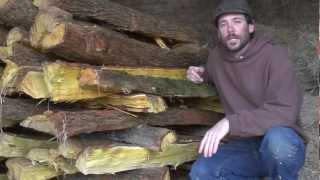 Osage: Harvesting & Splitting