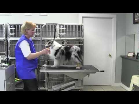 Oster® Large Dog Undercoat Rake