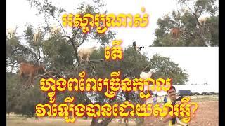 Khmer News today, Khmer new world,Khmer news 2018,Share World,