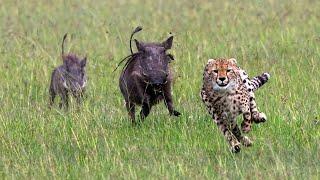 МАТЕРИ В ДЕЛЕ! Как самки буйвола, лошади, оленя, зебры, льва, слона, медоеда защищают детёнышей!