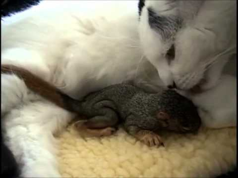 Cat rescues baby squirrel - Mary Cummins, Animal Advocates