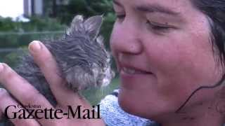 RAW: Kitten saved from drain pipe in dramatic rescue