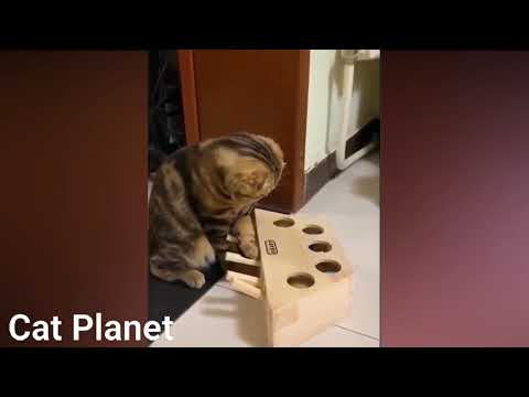 funny cats video compilation 2021 #shorts