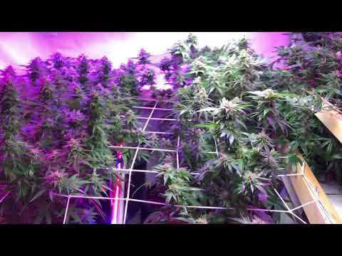 how to grow weed/cannabis/marijuana