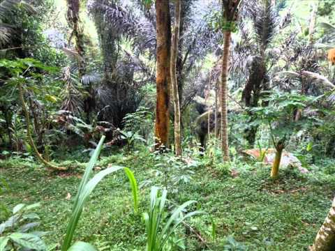 Property for sale in Bali, land for sale in Ubud Bali - TJUB227