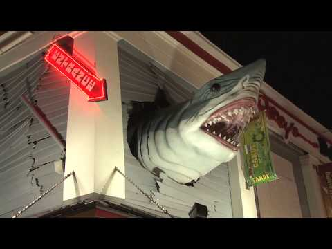 Shark Week  World&39;s Greatest Animals