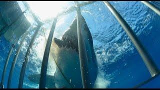 サメ被害映像(閲覧注意!) thumbnail