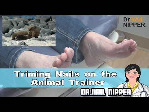 Trimming Nails on the Animal Trainer