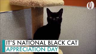 Check out these cute black cats you can adopt on national Black Cat Appreciation Day!!