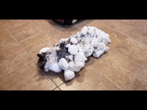 Хозяин не мог поверить, что эта глыба льда — его кошка, но врачи сотворили чудо