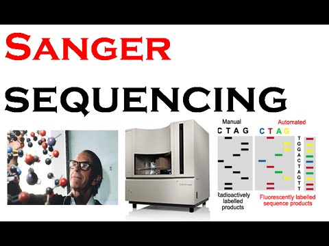 Sanger sequencing method of DNA | chain termination method
