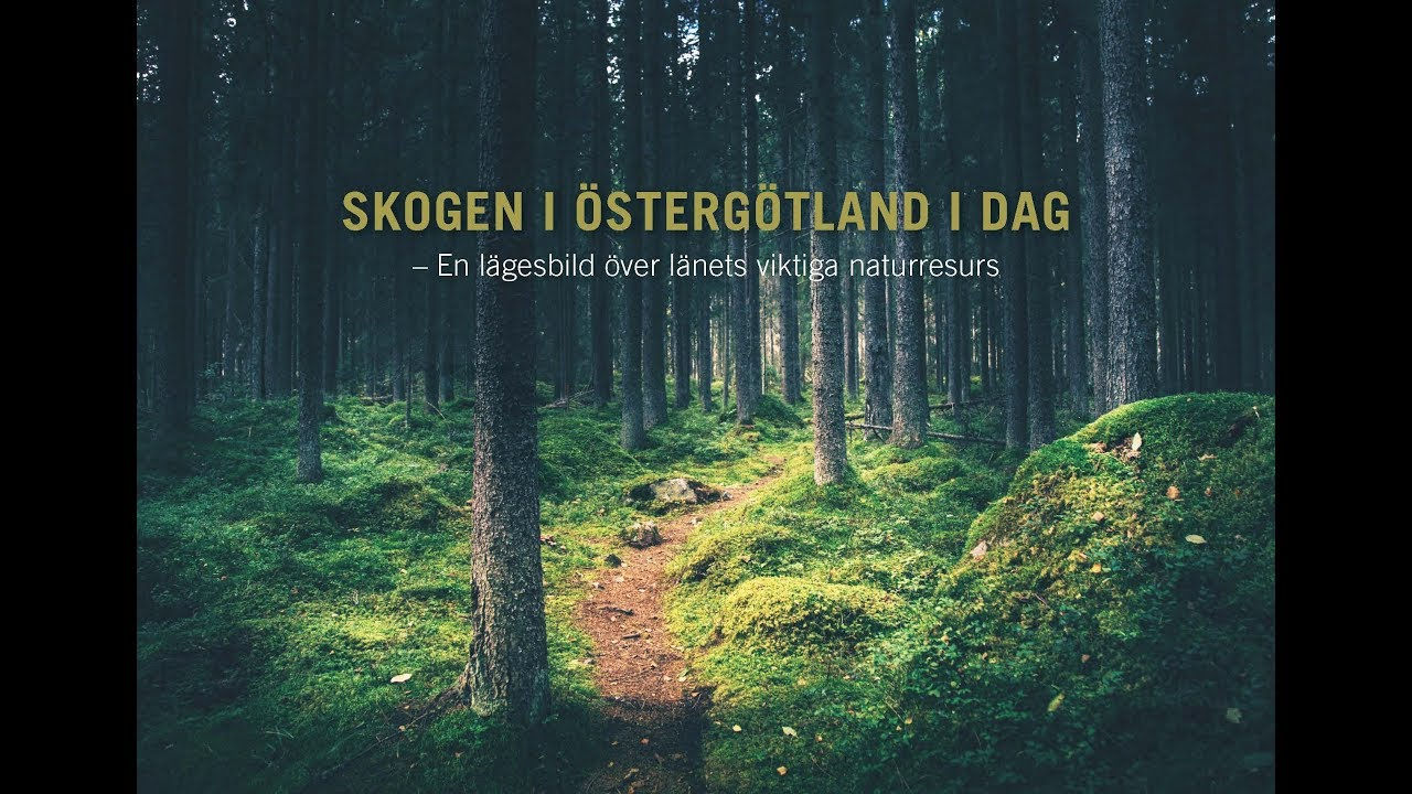 07af0995f6c Podcast: Skogen i Östergötland | Länsstyrelsen Östergötland