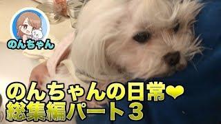 とにかく可愛いのんちゃん。 最近の動画集♪ #可愛い #犬 それいけのんち...