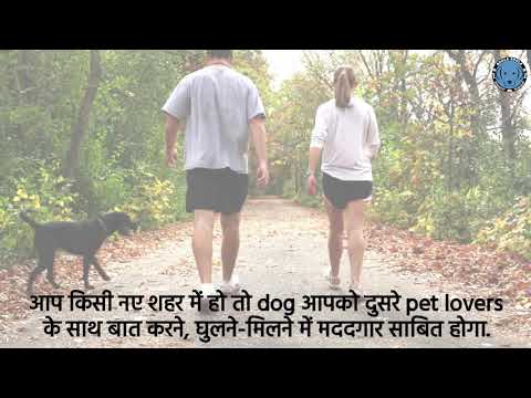 Dogs as Running Companions (HINDI VERSION)  - Bhola Shola