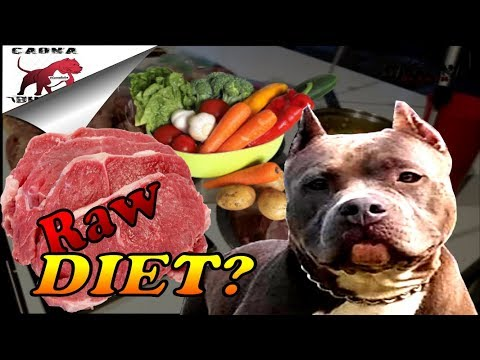 Raw Dog Food Diet for Pitbulls and Bullys ( How to get started) Let's go meat shopping!