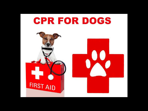 CPR For Dogs: Step By Step Guide.