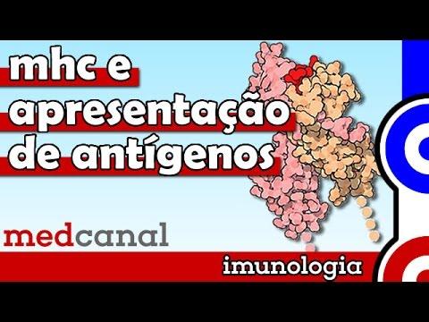 MHC e Apresentação de Antígenos | IMUNOLOGIA (Vídeo 7)