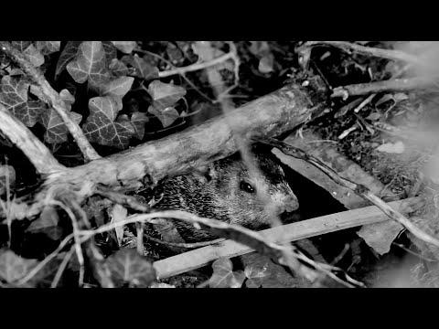 Thayer Sarrano - CREASE (Official Video)