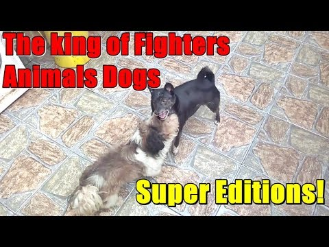 The king of Fighters Animals Dogs UFC Humor