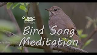 Bird Song Meditation: English
