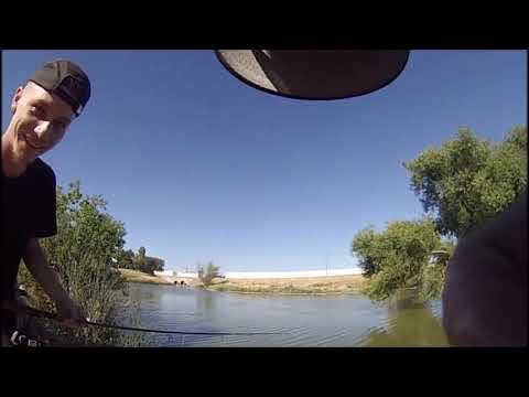 Putah Creek Exploring, And Sac Park Pond Catches.