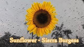 Download lagu Sunflower - Sierra Burgess ( Shannon Purser)  | Thanniza Cover