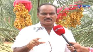 Successful farming of Date Palm or Kharjura in Nalgonda District - Express TV