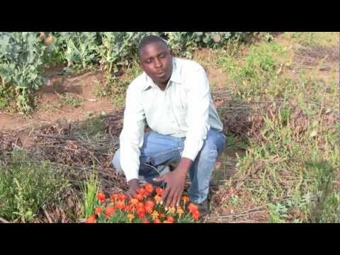 Crop protection in Africa