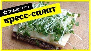 ПП бутерброд кресс салат