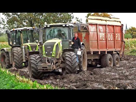 Harvesting mais in
