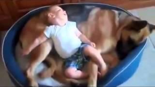 Лучшие приколы про собак с детьми
