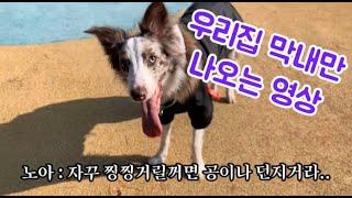 저 살아있어요...!(Feat. 우리집 강아지(?)만 나오는영상)