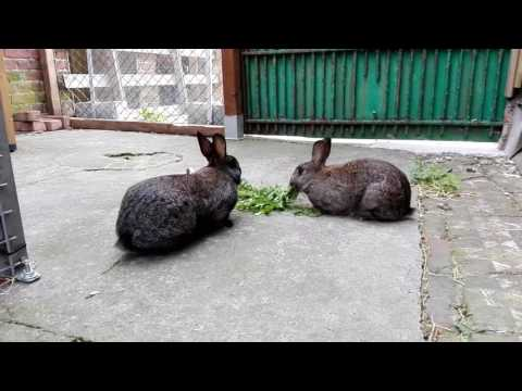 Paardenbloemen voor de konijnenmeisjes!