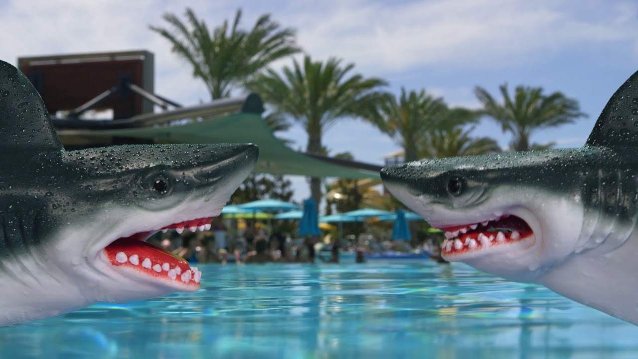 Shark Casino