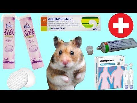 Влог. Поход к ветеринару. Лечение сирийского хомяка