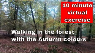 Short Virtual Walk for exercising - 10 minutes through the forest with the Autumn leaves
