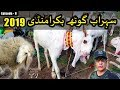 BAKRA MANDI SOHRAB GOTH 2019 KARACHI | Episode – 8 | Video In URDU/HINDI