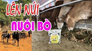 KỸ THUẬT CHĂN NUÔI BÒ SINH SẢN & BÒ THỊT - Review & hướng dẫn kỹ thuật cho trại bò quy mô 150 con