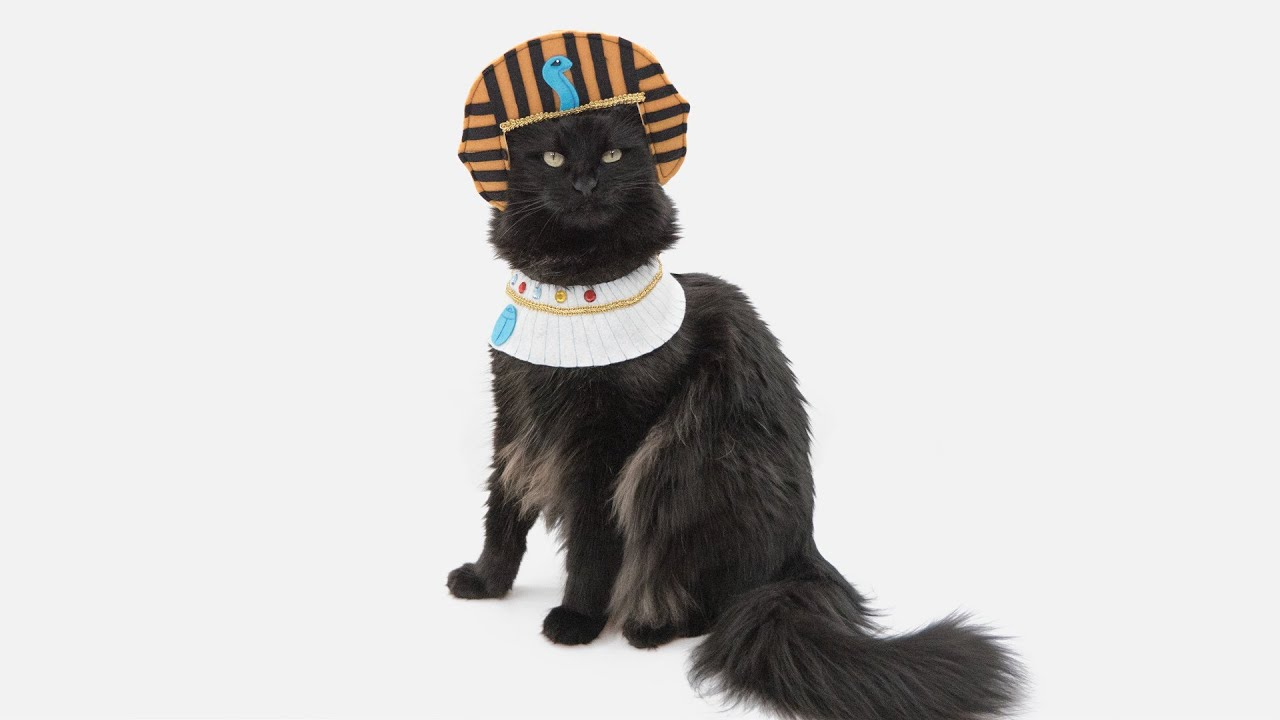 Sew A Pet Costume